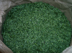 Shredded grass leaves after drying